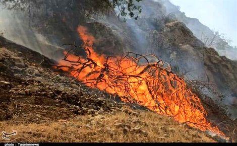 آتشسوزی جنگلها و مراتع ارسنجان؛ ۱۵۰ هکتار طعمه حریق شد