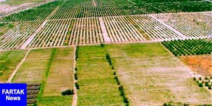 مدیر امور اراضی جهاد کشاورزی سمنان: نیمی از اراضی کشاورزی استان سمنان حدنگاری شد