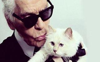 ثروتمندترین گربه دنیا! + فیلم