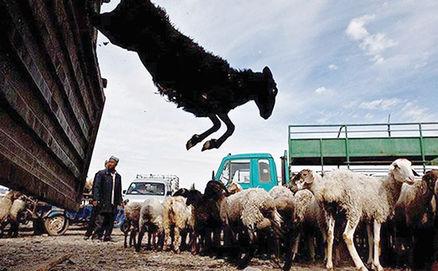 روند قاچاق دام از مرزهای استان افزایش زیادی داشته است