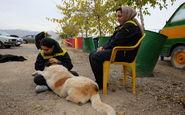 هشدار دادستانی به سگ گردانان در فردیس کرج