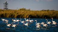 تالاب میقان اراک مامن پرندگان مهاجر و سرمایه ارزشمند طبیعی