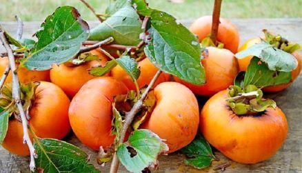 خرمالو، درمانگر نارنجی پاییز